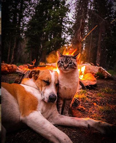 Кот Балу и собака Генри 3
