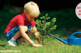 Загадки про дерево для детей