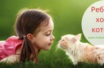 ребенок хочет котенка