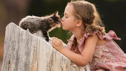 ребенок захотел котенка