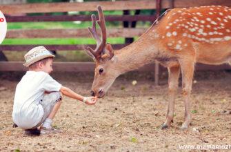 Загадки про зоопарк для детей