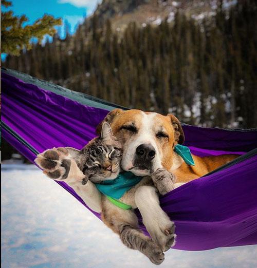 Кот Балу и собака Генри 6