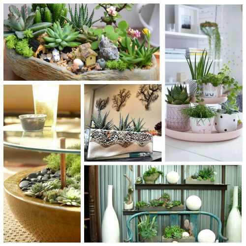 растения суккуленты в интерьере_3