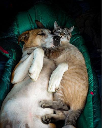 Кот Балу и собака Генри 5