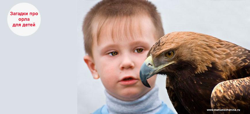 Загадки про орла для детей