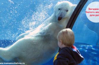 Загадки про белого медведя для детей