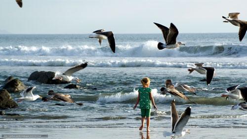 Загадки про чайку для детей с ответами