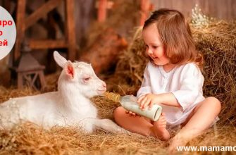 Загадки про молоко для детей