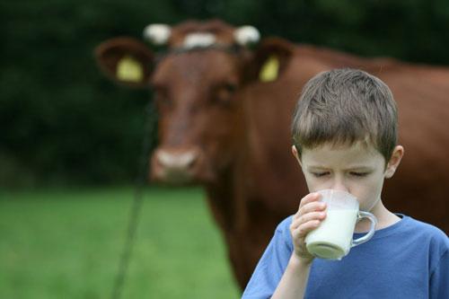 Загадки про молоко