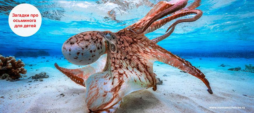 Загадки про осьминога для детей