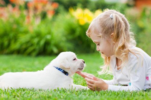 Загадки про щенка с ответами для детей