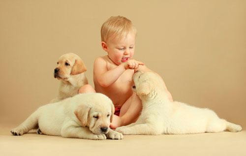 Загадки про щенка с ответами