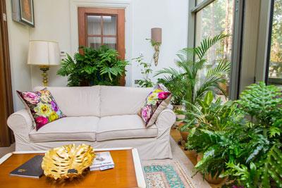 простой способ увлажнить воздух в квартире с помощью растений
