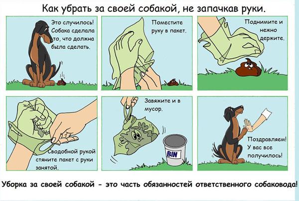 Забота об экологии и животных