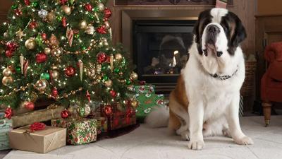 новогодних фильмов для всей семьи «Рождественское приключение Бетховена»