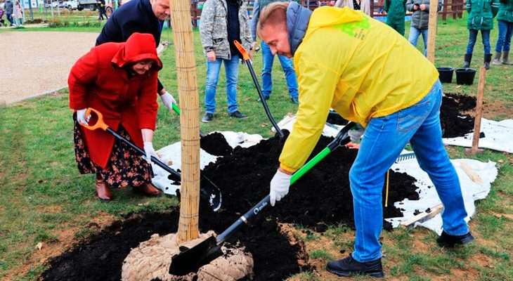 Успеть до 31 декабря: на сайте проекта «Наше дерево» заканчивается прием заявок на весеннюю высадку