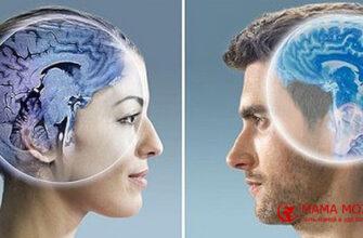 различия между мозгом мужчины и женщины