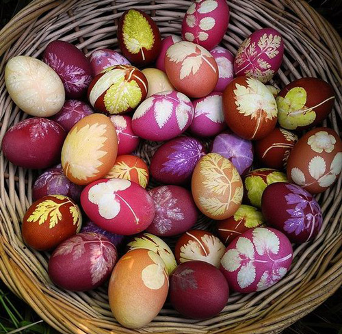 Покрасить яйца с помощью луковой шелухи и листьев 3