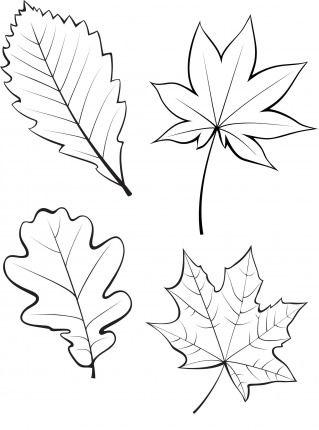 осенние листья для вырезания из бумаги 12