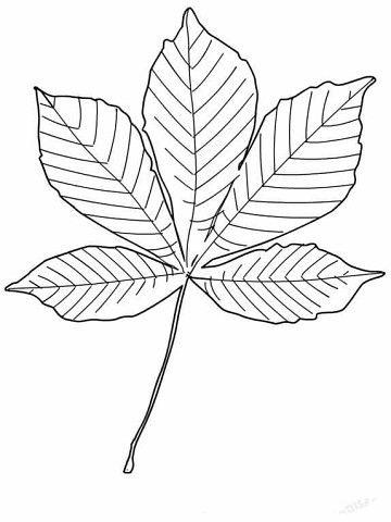 осенние листья для вырезания из бумаги 17