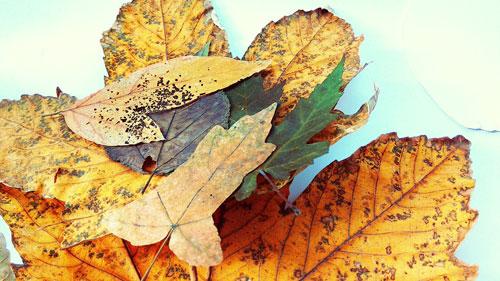 аппликации из листьев из цветной бумаги 3