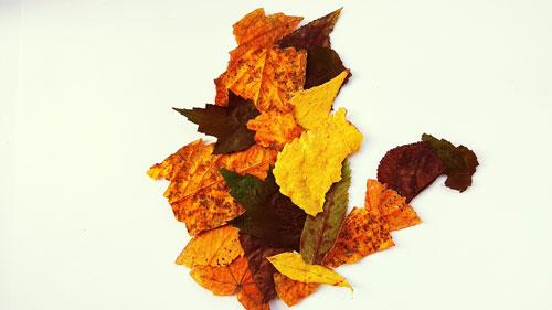 аппликации из листьев из цветной бумаги 2
