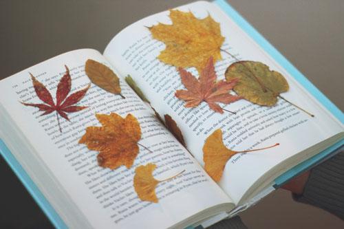 осенние листья букет