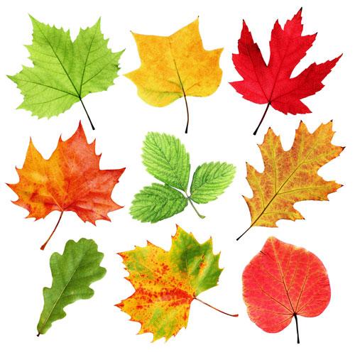 поделки на тему осень на листе