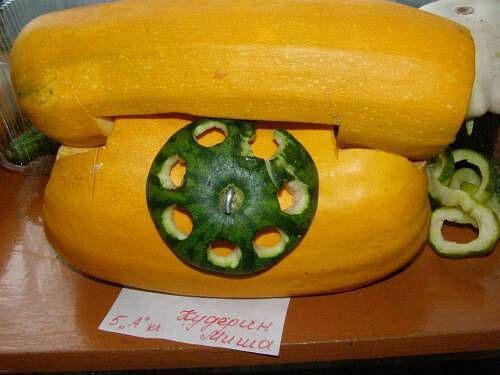 Поделки на тему осень из овощей в садик 4